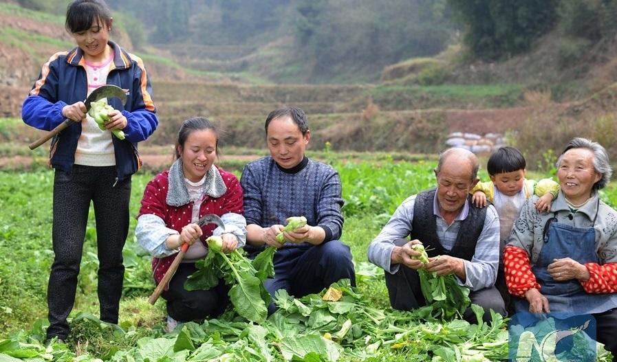 (Franja y Ruta) Iniciativa de la Franja y la Ruta ayuda a lograr desarrollo sostenible, dice jefe de FAO